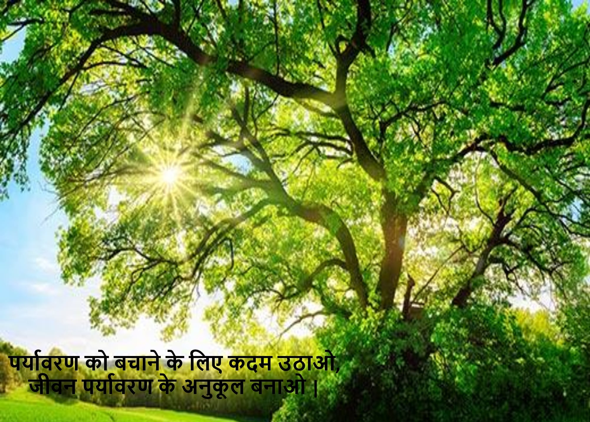 Save Environment Shayari In Hindi - Slogan