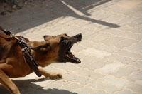 dog bite treatment in hindi कुत्ते के काटने पर प्राथमिक उपचार