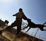 कुत्ता काटने के लक्षण और इलाज : Dog Bite Treatment in hindi