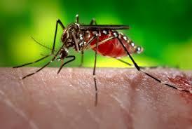 मलेरिया के लक्षण और उपचार , मलेरिया दिवस , World Malaria Day in hindi , राष्ट्रीय मलेरिया नियंत्रण कार्यक्रम