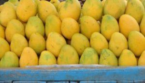 आम खाने के फायदे आम के पेड़ के लाभ