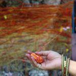 वट सावित्री व्रत 2017 की पूजा विधि, कथा व महत्व