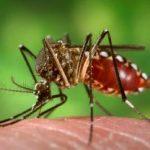 डेंगू बुखार के लक्षण उपचार और बचाव : Dengue Fever Vaccine, Treatment & Symptoms in hindi