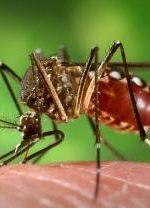 डेंगू के लक्षण और उपचार (Dengue Symptoms and Treatment in Hindi)
