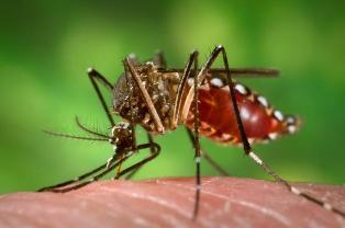 डेंगू बुखार के लक्षण, कारण व बचाव , Dengue in Hindi