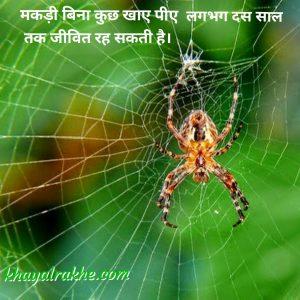 Adbhut Rochak Tathya