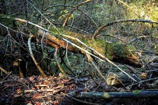 पर्यावरण पर निबन्ध - Environment Essay in Hindi
