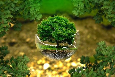 Save Trees Slogans In Hindi